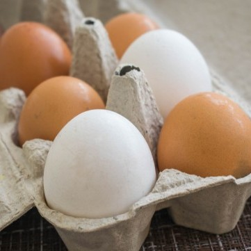 ما الفرق بين البيض البني والبيض الأبيض